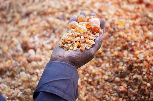Revitalizing the Sudan Gum Arabic Production and Marketing