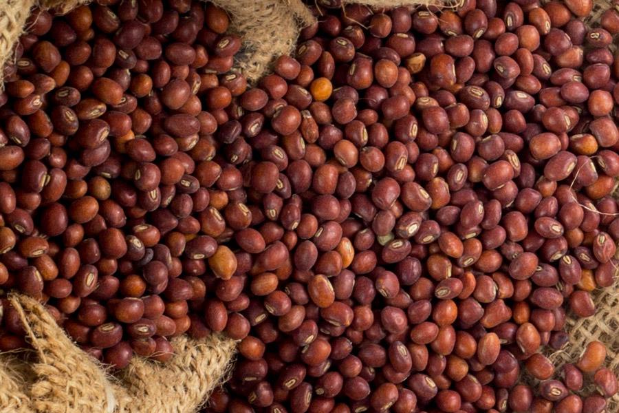Pure freshly <span>Harvested</span>