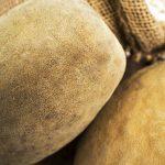 slide-baobab02