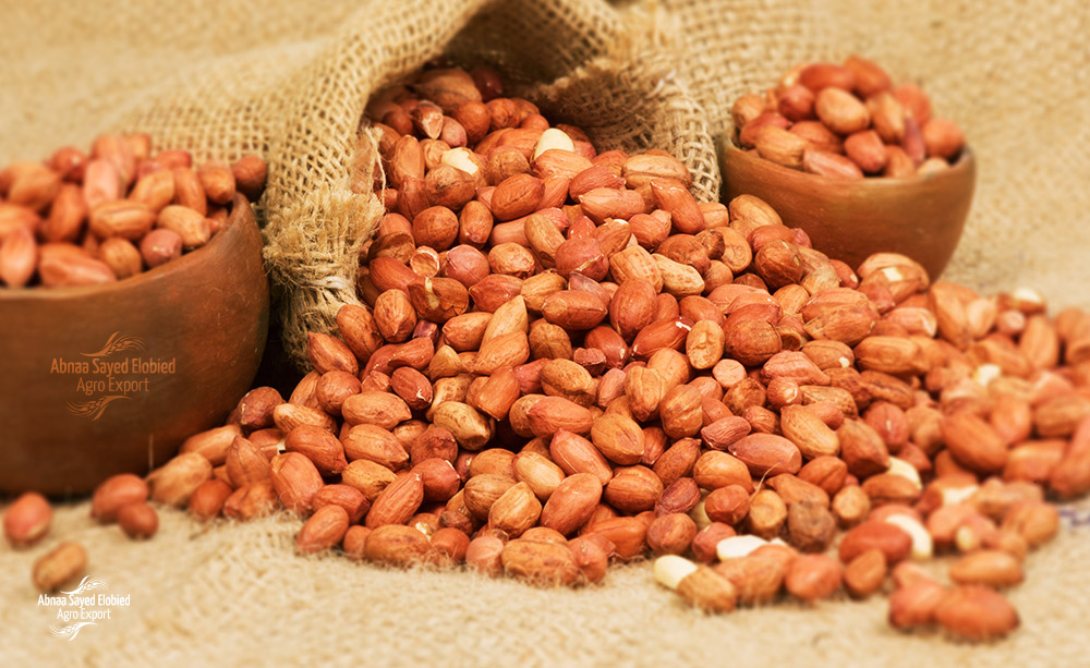 U.S. Company Settles Sudanese Peanuts with The Latest Technology