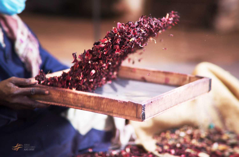 Revitalizing the Sudan Gum Arabic Production and Marketing