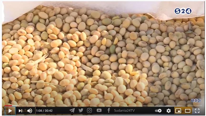 تجربة وانتاج محصول فول الصويا