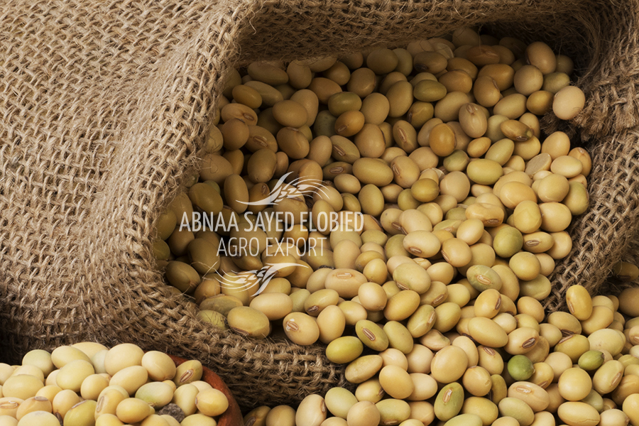 Adding Soybean to our List of Products